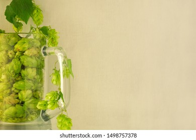Beer glass mug filled with green hop cones and twining bines around. Concept of brewing process. Traditional craft ingredient for brewery. Side view with light fabric copy space