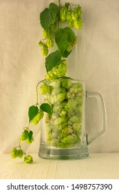 Beer glass mug filled with green hop cones and twining bines around. Concept of brewing process. Traditional craft ingredient for brewery. Vertical side view on light fabric background