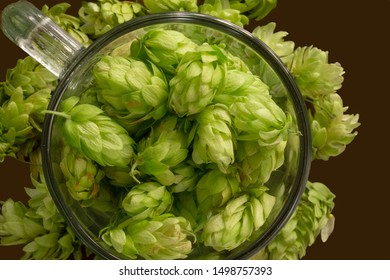 Beer glass mug filled with green hop cones. Concept of brewing process. Traditional craft ingredient for brewery. Top view
