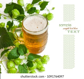 Beer and hop isolated on a white background