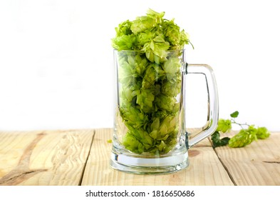 Beer mug filled with green fresh hops on a wooden table, white background. Ingredient for beer.