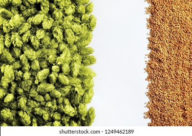 Beer template with hops and wheat on white background. Top of the view. Mockup  ready for your design.