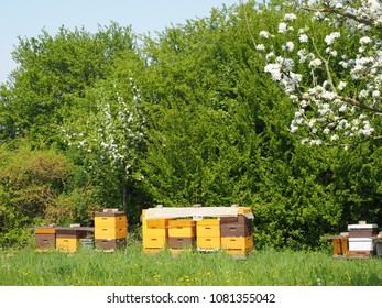 Bees Baskets