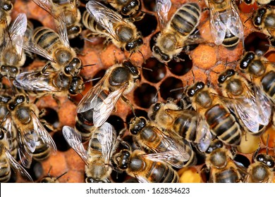 bees in the beehive