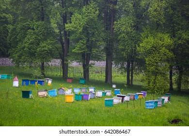 Bees. Beekeepers working in apiary.