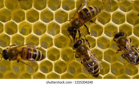Bees build honeycombs and honey close to them.