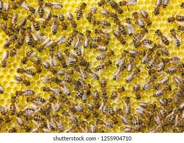 Bees build honeycombs and transform nectar into honey