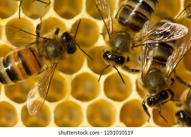 Bees build honeycombs. Work in a team