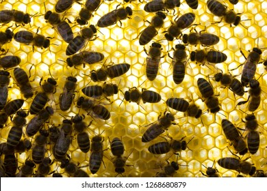 Bees build honeycombs. Work in a team.