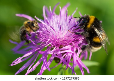 Bees collect nectar