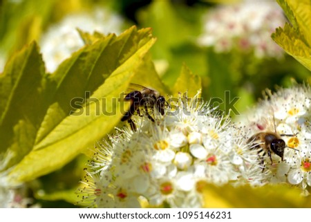 Bees Collect Nectar Spring Flowers Stock Photo Edit Now 1095146231