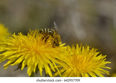 Bees collect pollen from flowers