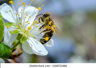 bees collects pollen from flowers