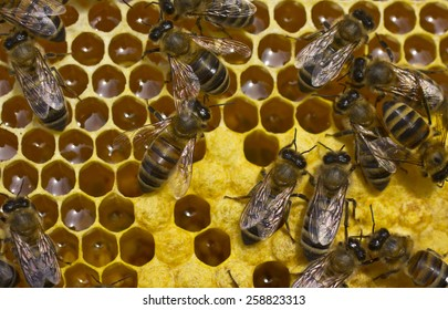 Bees convert nectar into honey and cover it in honeycombs and take care of the larvae