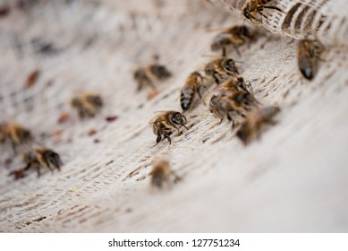 Bees crawling on the basis of tissue and look for food