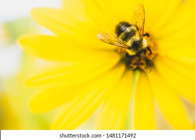 Bees are a critical part of our food system, & without them the food we love would be lost. Protect bees toxic pesticides, to save our food & pollinators. happy bee background, flowers. save the bees!