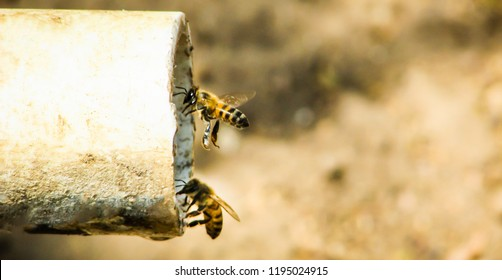 bees drinking wate in the mouth of a cano