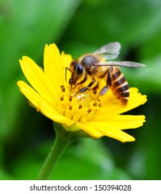 Bees to a flower.