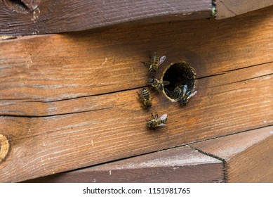 Bees fly out of the hive
