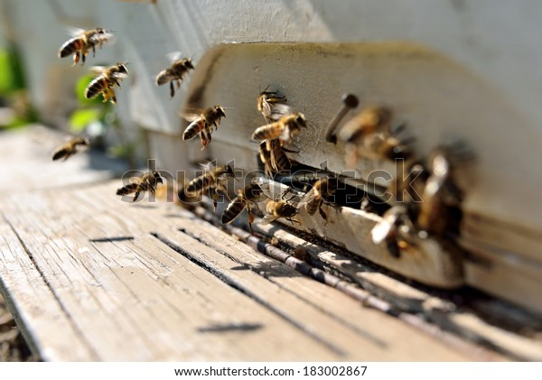 bees flying in front of a beehive