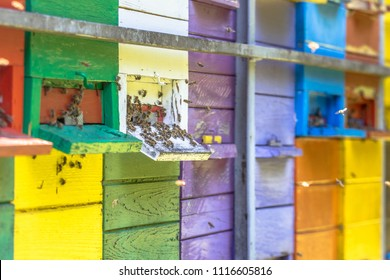 Bees flying in front of Colorful beehive in many different colors on truck