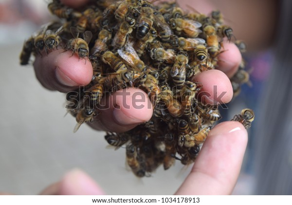 Bees in hand