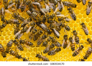 Bees make bee queen to lay eggs.