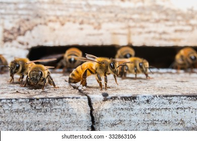 The bees for nectar