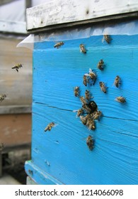 Bees at old hive entrance. Bees are returning from honey collection to blue hive. Bees are at entrance. Honey-bee colony guards hive from looting honeydew. bees return to beehive after the honeyflow.
