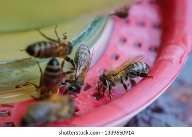 bees on a drinking bowl with sweet water in an apiary. Feeding of bees during the absence of honey collection. Bees close-up on a jar of water and yellow syrup.