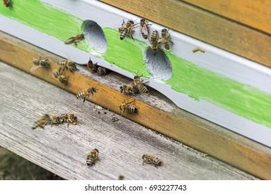 bees on a entrance of a beehive