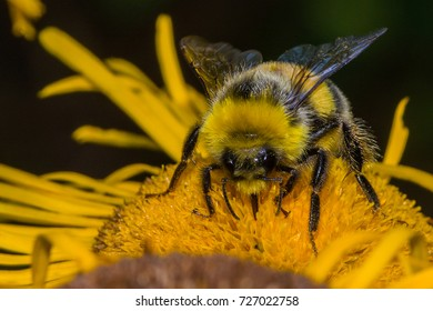 Bees on the flower