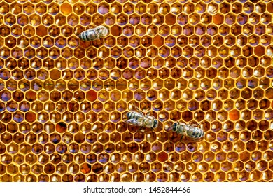 Bees on honeycomb closeup background