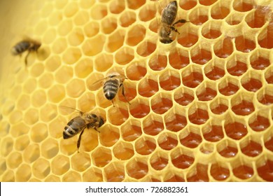 Bees on a honeycomb, inside the beehive