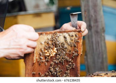 Bees on honeycombs.honey in honeycombs