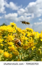 Bees on yellow pollen plants outside on a mountain with a cloudy sky