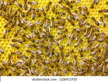 Bees produce wax and build honeycombs from it