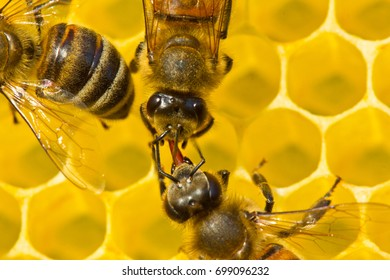 Bees share information, pass each other nectar. A good and original story.