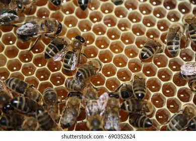 Bees sitting on honeycombs with honey