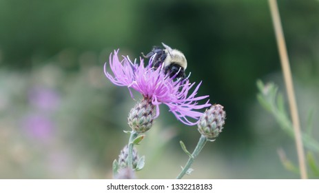 Bees staying in the flowers.