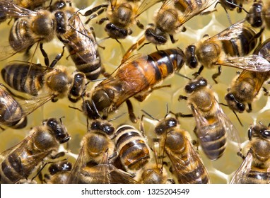 Bees stimulate the young queen bee to lay eggs.