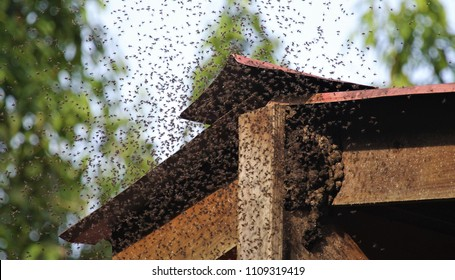bees swarming bee hive