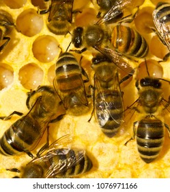Bees take care of larvae â?? their future generation.