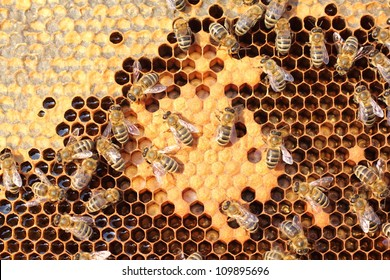 Bees take care of the larvae - their new generation.