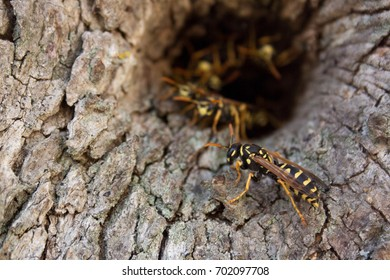 Bees in a tree
