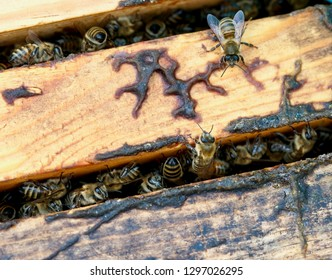 Bees in the wintertime in their hives, reduced activity due to cold weather, staying in the hives and clean and prepare for new life, macro photography