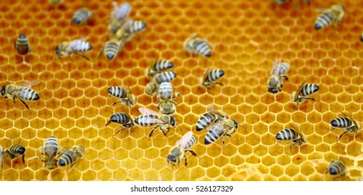 Bees workers