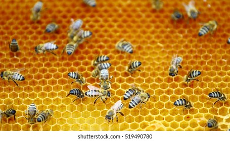 Bees workers in honeycomb