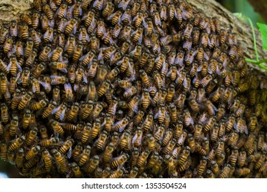 Bees working in the beehive and wing movement