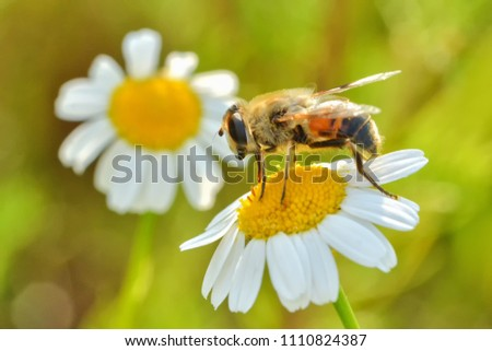 Bees Working Natural Environment Stock Photo (Edit Now
